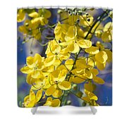 Golden Shower Tree - Cassia Fistula - Kula Maui Hawaii Shower Curtain