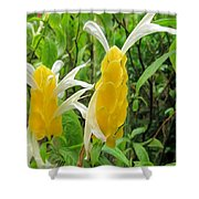 Golden Shrimp Plant Or Lollipop Plant Shower Curtain