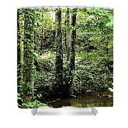 Golden Silence In The Forest Shower Curtain