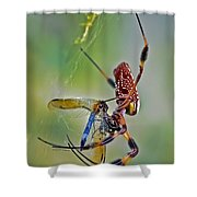 Golden Silk Orb With Blue Dragonfly Shower Curtain