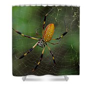 Golden Silk Spider 10 Shower Curtain