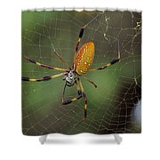 Golden Silk Spider 9  Shower Curtain