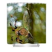 Golden Silk Spider Shower Curtain