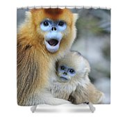 Golden Snub-nosed Monkey And Young China Shower Curtain