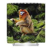 Golden Snub-nosed Monkey Male China Shower Curtain