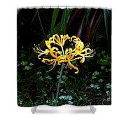Golden Spider Lily Shower Curtain
