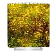 Golden Spring Shower Curtain
