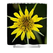 Golden Star Flower Yellow Salsify Glacier National Park Shower Curtain