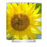 Golden Sunflower - 2013 Shower Curtain