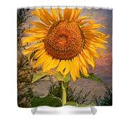 Golden Sunflower Shower Curtain by Adrian Evans