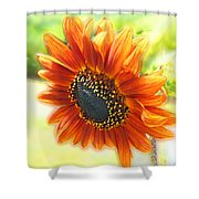 Golden Sunflower Shower Curtain