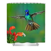 Golden-tailed Sapphire At Flower Shower Curtain