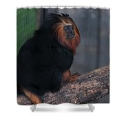 Golden Tamarin Shower Curtain