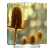 Golden Teasels Shower Curtain