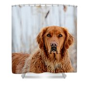 Golden Thoughts Shower Curtain