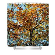 Golden Tree Lined Sky Shower Curtain