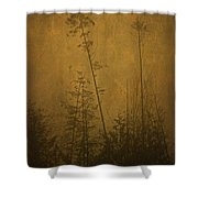 Golden Trees In Winter Shower Curtain