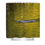 Golden Waters Shower Curtain