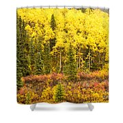 Golden Yellow Fall Boreal Forest In Yukon Canada Shower Curtain