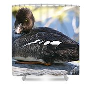 Goldeneye Shower Curtain