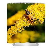 Goldenrod Beetle Shower Curtain