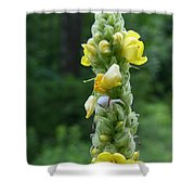 Goldenrod Crab Spider In Yellow Shower Curtain