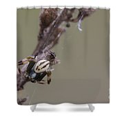 Goldenrod Crab Spider Male  Shower Curtain
