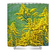 Goldenrod Flowers Shower Curtain