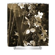 Goldenrod In Sepia Shower Curtain