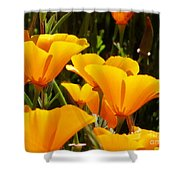 Golden Poppies Shower Curtain