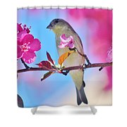 Goldfinch Behind Pink Blossoms 031015aaa Shower Curtain