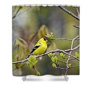Goldfinch In Spring Shower Curtain