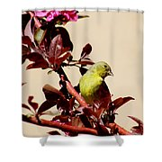 Goldfinch In Tree 031015a Shower Curtain