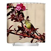 Goldfinch In Tree 031015aa Shower Curtain