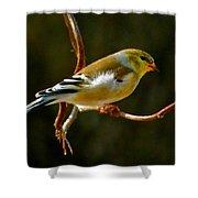 Goldfinch Shower Curtain