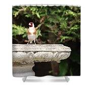 Goldfinch On Birdbath Shower Curtain