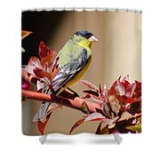 Goldfinch On Branch 031015aa Shower Curtain