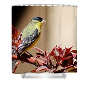 Goldfinch On Branch 031015aab Shower Curtain