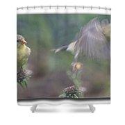 Goldfinch On Echinacia Shower Curtain