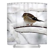 Goldfinch On Snowy Branches Shower Curtain