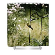 Goldfinch On The Lookout -19 Shower Curtain