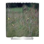 Goldfinch Party Shower Curtain