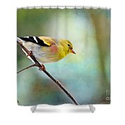 Goldfinch With Rosy Shoulder - Digital Paint IIi Shower Curtain