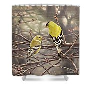 Goldfinches In The Rain Shower Curtain