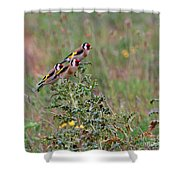 Goldfinches Shower Curtain