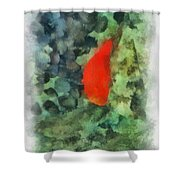 Goldfish Photo Art 04 Shower Curtain