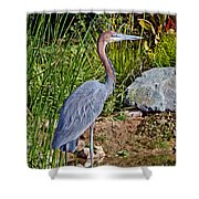 Goliath Heron By Water Shower Curtain