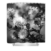 Gone To Seed Wild Aster Shower Curtain