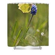 Gonepteryx Rhamni On The Blue Flower Shower Curtain