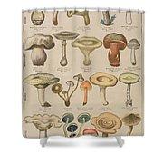 Good And Bad Mushrooms Shower Curtain